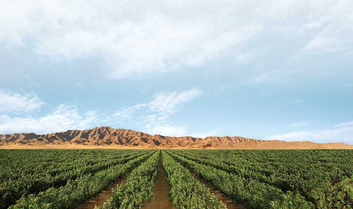 Wonderful pistachio and almonds farm field